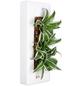 Pflanzen in Keramik, BxHxT: 40 x 16 x 22 cm, weiß-Thumbnail