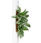 Pflanzen in Keramik, BxHxT: 40 x 6,5 x 22 cm, weiß-Thumbnail