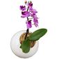 Pflanzen in Keramik Orchidee-Edition Ball, weiss, BxHxT: 12 x 12 x 22  cm-Thumbnail