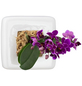 Pflanzen in Keramik Orchideen-Edition  Box 1, weiss, BxHxT: 16 x 16 x 22  cm-Thumbnail