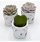 »Pflanzen-Set mit Übertöpfen Beton- Herz«-Thumbnail