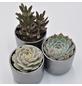 »Pflanzen-Set mit Übertöpfen Kopenhagen«-Thumbnail