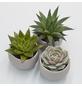 »Pflanzen-Set mit Übertöpfen Olso«-Thumbnail