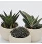 »Pflanzen-Set mit Übertöpfen Ornamente«-Thumbnail