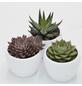 »Pflanzen-Set mit Übertöpfen Stockholm«-Thumbnail