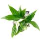 flowerbox Pflanzenbild, BxHxT: 17 x 17 x 6 cm, weiß-Thumbnail