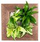 Pflanzenbild »Flowerwall«, BxHxT: 31 x 31 x 22 cm, braun-Thumbnail