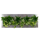 Pflanzenbild Pflanzenbild »Flowerwall«, max. Wuchshöhe: 40  cm, mehrjährig-Thumbnail