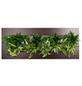 Pflanzenbild Pflanzenbild »Flowerwall« Premium, max. Wuchshöhe: 40  cm, mehrjährig-Thumbnail