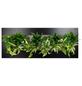 Pflanzenbild Pflanzenbild »Flowerwall« Premium , max. Wuchshöhe: 40  cm, mehrjährig-Thumbnail