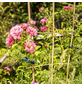 WINDHAGER Pflanzenhalter, Kunststoff-Thumbnail
