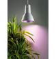 BIOGREEN Pflanzenlampe »L15«, BxT: 0 x cm-Thumbnail