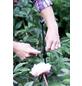 Peacock Pflanzenstütze, BxHxT: 5 x 2 x 5 cm, Stahl-Thumbnail