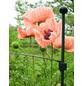 Peacock Pflanzenstütze, BxHxT: 75 x 2 x 0,5 cm, Glasfaser-Thumbnail