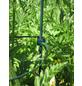 Peacock Pflanzenstütze, ØxH: 8 mm x 14 cm, Kunststoff-Thumbnail