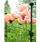 Peacock Pflanzenstütze, ØxH: 8 mm x 50 cm, Glasfaser-Thumbnail