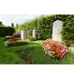 FLORAGARD Pflanzerde, für Grabgestaltung-Thumbnail