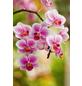 FLORAGARD Pflanzerde, für Orchideen, torffrei-Thumbnail