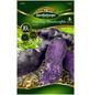 Quedlinburger Pflanzkartoffel, Solanum tuberosum »Gaiane«, 10 Stück-Thumbnail