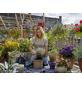 GARDENA Pflanzmatte »city gardening«, Polypropylen, türkis, BxL: 1,2 x 1,8 m-Thumbnail