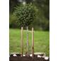 MR. GARDENER Pflanzstab, Holz, teakbraun, BxHxT: 3 x 150 x 3 cm-Thumbnail