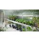 KGT Pflanzwanne »Callas«, BxHxL: 300 x 10 x 63,5 cm, Aluminium-Thumbnail