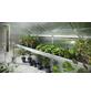 KGT Pflanzwanne »Flora IV«, BxHxt: 300 x 10 x 63,5 cm, Aluminium-Thumbnail
