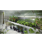 KGT Pflanzwanne »Orchidee III«, BxHxt: 323 x 10 x 63,5 cm, Aluminium-Thumbnail
