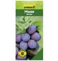 GARTENKRONE Pflaume, Prunus domestica »Herman«, Früchte: süß-säuerlich, zum Verzehr geeignet-Thumbnail