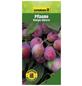 GARTENKRONE Pflaume, Prunus domestica »Königin Viktoria«, Früchte: süß-säuerlich, zum Verzehr geeignet-Thumbnail