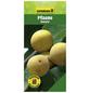 GARTENKRONE Pflaume, Prunus domestica »Ontario«, Früchte: süß-säuerlich, zum Verzehr geeignet-Thumbnail