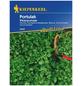KIEPENKERL Portulak Montia perfoliata »Winterportulak«-Thumbnail