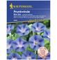 KIEPENKERL Prunkwinde, Ipomoea purpurea, Samen, Blüte: blau-Thumbnail