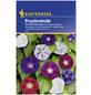 KIEPENKERL Prunkwinde, Ipomoea purpurea, Samen, Blüte: mehrfarbig-Thumbnail