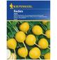 KIEPENKERL Radieschen Raphanus sativus var. sativus »Zlata«-Thumbnail