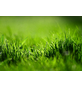 FLORAGARD Rasenerde, für Rasen-Neuanlage-Thumbnail