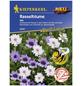 KIEPENKERL Rasselblume, Catanache caerulea, Samen, Blüte: mehrfarbig-Thumbnail