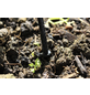 VITAVIA Regentonnentropfrohr, BxT: 11 x 24 cm-Thumbnail