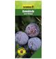 GARTENKRONE Reneklode, Mirabelle, Prunus domestica »Graf Althans«, Früchte: süß-säuerlich, zum Verzehr geeignet-Thumbnail