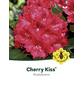 Rhododendron »Cherry Kiss«, rot, Höhe: 30 - 40 cm-Thumbnail