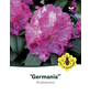 Rhododendron »Germania«, rosa, Höhe: 30 - 40 cm-Thumbnail