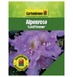 GARTENKRONE Rhododendron hybride »Goldflimmer«, violett, Höhe: 25 - 30 cm-Thumbnail