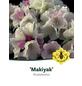 Rhododendron makinoi »Makiyak«, weiß/rosa, Höhe: 30 - 40 cm-Thumbnail