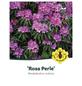 Rhododendron makinoi »Rosa Perle«, rosa, Höhe: 30 - 40 cm-Thumbnail