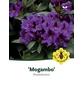 Rhododendron »Mogambo«, violett, Höhe: 30 - 40 cm-Thumbnail
