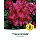 Rhododendron »Nova Zembla«, rot, Höhe: 40 - 50 cm-Thumbnail
