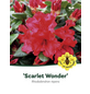 Rhododendron repens »Scarlet Wonder«, rot, Höhe: 20 - 25 cm-Thumbnail