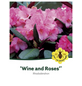 Rhododendron »Wine and Roses«, rosa, Höhe: 30 - 40 cm-Thumbnail