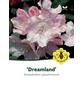 Rhododendron yakushimanum »Dreamland«, rosa, Höhe: 25 - 30 cm-Thumbnail