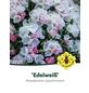 Rhododendron yakushimanum »Edelweiß«, weiß, Höhe: 25 - 30 cm-Thumbnail